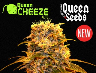 Queen Cheeze